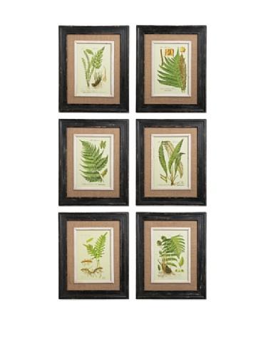 Vi Framed Print Set (Framed Fern Prints, Set of 6)