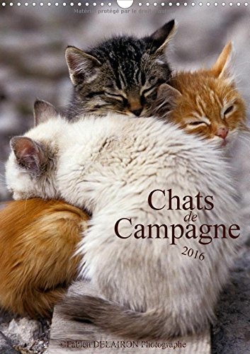 Chats de campagne 2016: 12 photos de chats des champs (Calvendo Animaux) (French Edition) by Calvendo Verlag GmbH