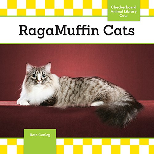 Ragamuffin Cats (Ragamuffin Cats)