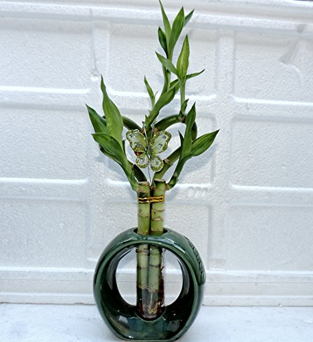 Tall Lucky Bamboo (jmbamboo Live heart Style Lucky Bamboo Plant Arrangement w/ Round Ceramic Vase)