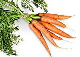Organic Danvers 126 Half Long Carrot 600 Seeds (Non-Gmo) Upc 646263362259 + 2 Plant Markers