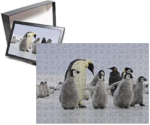 Baby Emperor Penguin Chick - 8