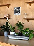 Costa Farms Clean Air-O2 For You Live House Plant