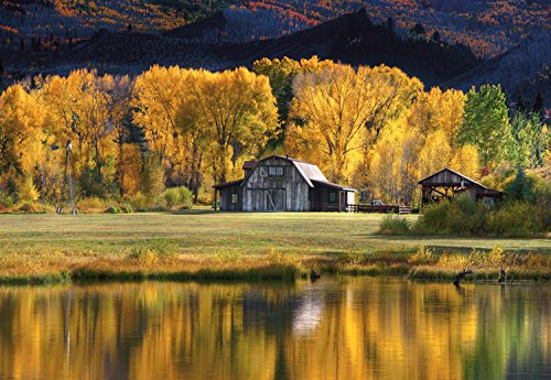 Aspen Trees with Barn , 25x36in. (paper) by