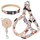EXPAWLORER No Pull Dog Harness and Leash Set with
