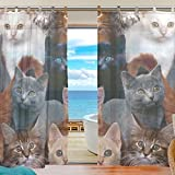 INGBAGS Bedroom Decor Living Room Decorations Cat Pattern Print Tulle Polyester Door Window Gauze Sheer Curtain Drape Two Panels Set 55×78 inch ,Set of 2 Review