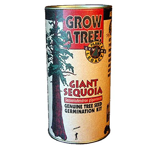 Tree Growing Kit - Giant Sequoia - by Jonsteen (Grow Tree Seed)