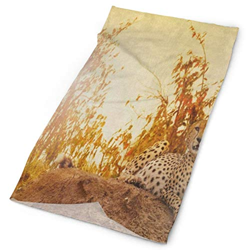 Headband Leopard Cheetah Laying On Sunset Mountain Landscape Nature Outdoor Scarf Mask Neck Gaiter Head Wrap Sweatband Sports Headwear