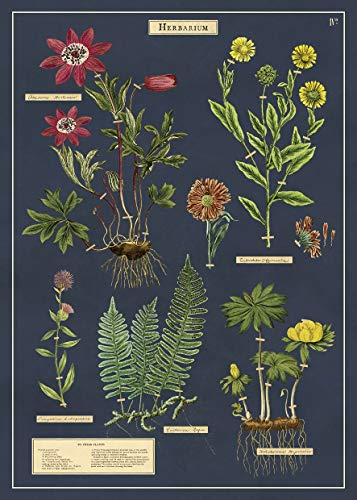 Cavallini & Co. Decorative Paper Sheet 20