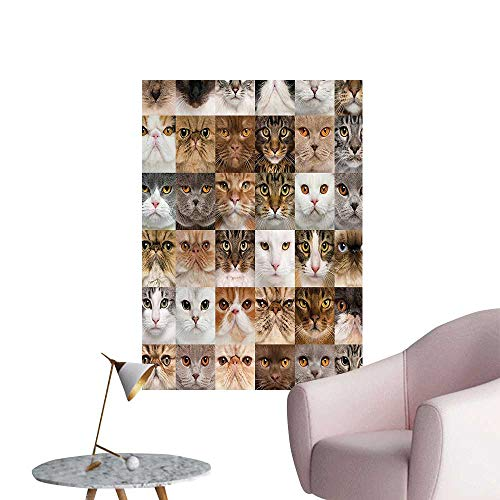 (Wall Decals 36 Cat Heads Breed British Shorthair Turkish Angora Looking at Camera Environmental Protection Vinyl,24