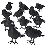 Shrocko Halloween Realistic Looking Feathered Crows (9 pcs) Props For Home Décor and Party Decoration Raven Birds