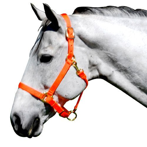 Intrepid International Nylon Halter, Neon Orange, Horse