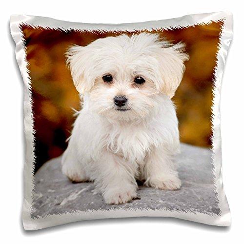 RinaPiro - Dogs - Maltese. Cute little puppy. - 16x16 inch Pillow Case (pc_233933_1) - Maltese Blanket