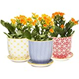 """Chive - Liberte, Small Succulent and Cactus Planter Pot, 3"""" Flower and Plant Container with Drainage Hole / Saucer, Mini Pot for Indoor / Outdoor Garden Decor, Yellow, Blue, (Liberte 3 Set of 3)"""