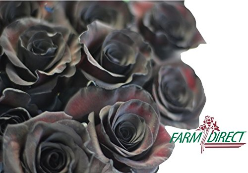 100 Real Fresh Black Roses | Exotic and amazing by FarmDirect