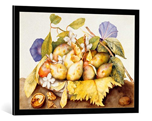 kunst für alle Framed Art Print: Giovanna Garzoni Bowl with Plums Jasmine Flowers and Walnut - Decorative Fine Art Poster, Picture with Frame, 33.5x23.6 inch / 85x60 cm, Black/Edge Grey ()