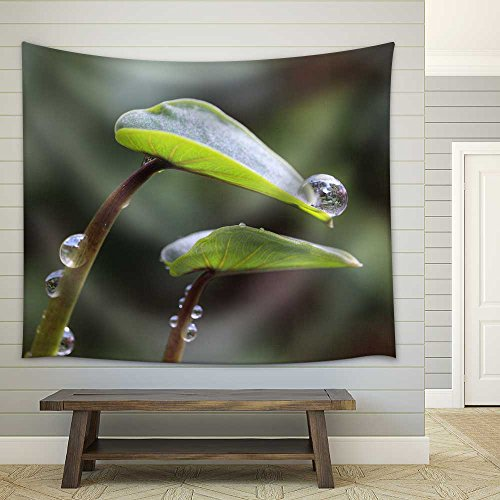 Taro Leaves in The Morning Dew Fabric Wall