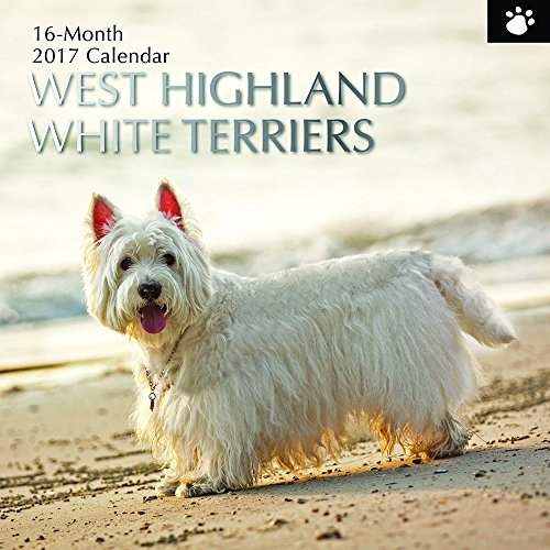 "Dog Breeds - West Highland White Terriers 2017 Monthly Wall Calendar, 12"" x 12"""