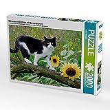 Schwarz-weiße Katze mit Sonnenblumen 2000 Teile Puzzle quer: Eine zweifarbige schwarz-weiße Hauskatze, Europäisch Kurzhaar, balanciert auf einem ... Garten mit Sonnenblumen (CALVENDO Tiere)