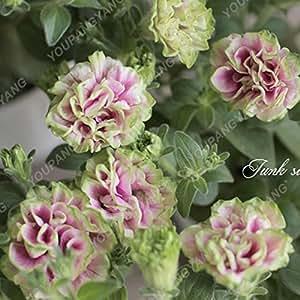 Las semillas de la petunia 100pcs cuatro estaciones se pueden plantar 25 tipos de colores semillas de la petunia Flor En los bonsais por un jardín de DIY Borgoña Plantación