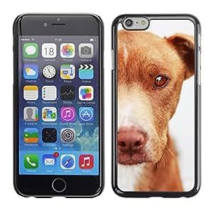 TopCaseStore / la caja del caucho duro de la cubierta de protección de la piel - Mutt Mongrel Dog Brown Canine - Apple iPhone 6 Plus 5.5