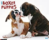 Boxer Puppies 2013 Wall Calendar (Just (Willow Creek))