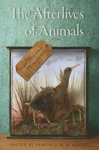 Read Online The Afterlives of Animals: A Museum Menagerie pdf