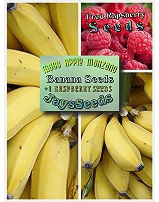 Musa Apple Manzano Banana Tree Certified Banana Seeds UPC 600188190731 (155 Seeds Total) Free Raspberry