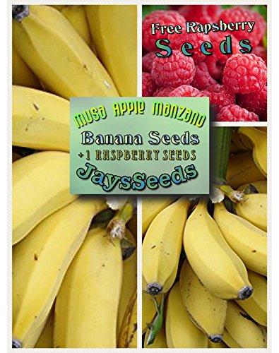 anana Tree Certified Banana Seeds UPC 600188190731 (155 Seeds Total) Free Raspberry (Yellow Fruit Tree)