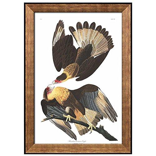 Beautiful Illustration Inside of an Elegant Frame of a Brasilian Caracara Eagle by John James Audubon Framed Art