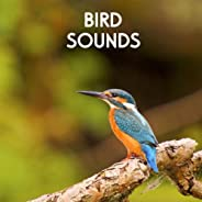 Gentle Birds and Forest Stream for Relaxation Meditation. Relaxing Nature's Sounds for Sound Therapy calming Birds and Sound