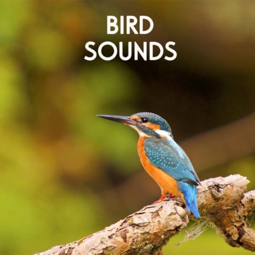 Gentle Birds and Forest Stream for Relaxation Meditation. Relaxing Nature's Sounds for Sound Therapy calming Birds and Sounds of Nature for Mindfulness Méditation and Relaxation
