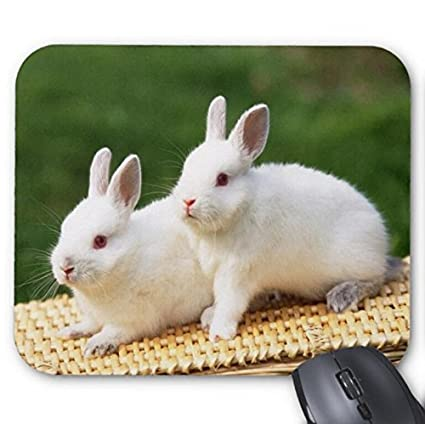 d4a8ce26d1037 Amazon.com : Rabbits Animals Mouse Pad : Office Products