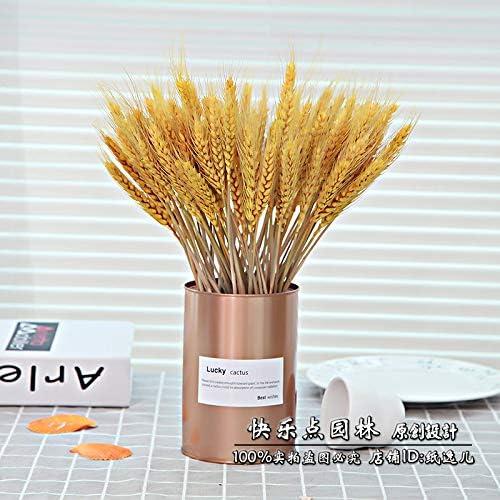 天然小麦耳乾燥花小麦小麦ブーケ大麦リビングルーム牧畜装飾射撃小道具フラワーアレンジメントデコレーション 黄100ゴールド入り缶