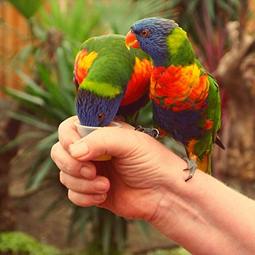 - Home Comforts Peel-n-Stick Poster of Hand Birds Parrot Rainbow Lorikeet Stick Coloured Vivid Imagery Poster 24 x 16 Adhesive Sticker Poster Print