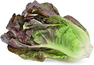 Red Romaine Lettuce Seeds, 1000 Heirloom Seeds Per Packet, Non GMO Seeds