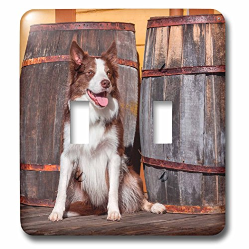 3dRose Danita Delimont - Dogs - Border Collie sitting by wooden barrels, MR - Light Switch Covers - double toggle switch (lsp_258124_2)