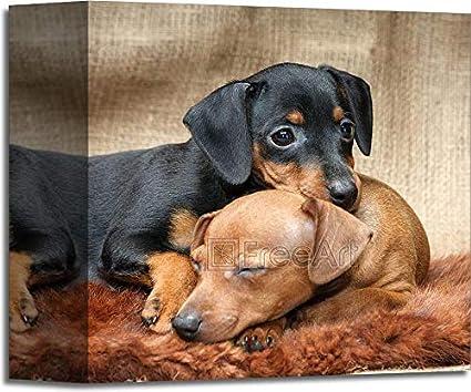 Amazoncom Barewalls Miniature Pinscher Puppies Gallery Wrapped