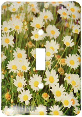 3dRose lsp_83503_1 Wild Daisy Flower Na01 Pri0001 Prisma Single Toggle Switch