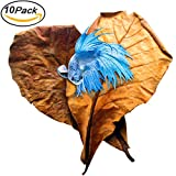 (US) Betta Leaves by SunGrow - Replicate natural habitat for betta & improve well-being - Tannin improves immunity, prevents harmful bacterial growth - Easy to use, add 1 piece per water change