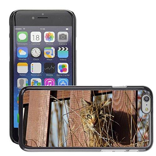 "Just Phone Cases Hard plastica indietro Case Custodie Cover pelle protettiva Per // M00127999 Cat Kitten Voir Animal Clôture Eye // Apple iPhone 6 PLUS 5.5"""