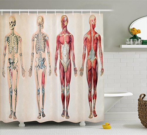 Muscles Human Skeleton (Ambesonne Human Anatomy Shower Curtain, Vintage Chart of Body Front Back Skeleton and Muscle System Bone Mass Graphic, Fabric Bathroom Decor Set with Hooks, 84 Inches Extra Long, Ruby Cream)