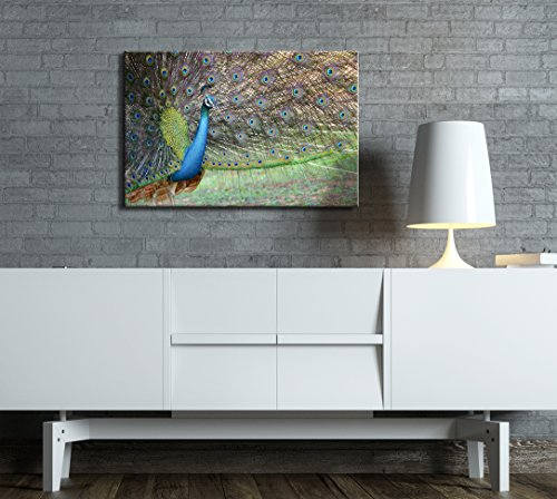 Portrait of Beautiful Peacock with Feathers Out Spreading Its Tail Wall Decor