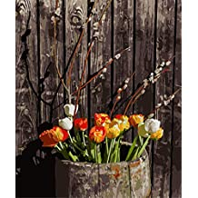 ABEUTY DIY Paint by Numbers for Adults Beginner - Beautiful White & Orange Pink Flower 16x20 inches Number Painting Anti Stress Toys (No Frame)