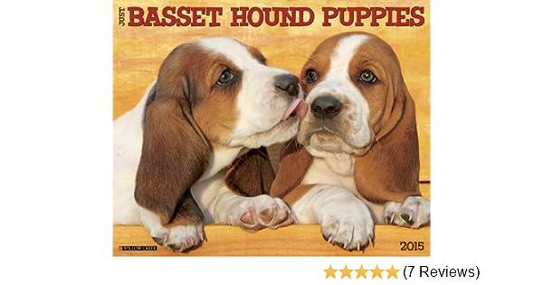 Just Basset Hound Puppies 2015 Wall Calendar Willow Creek Press