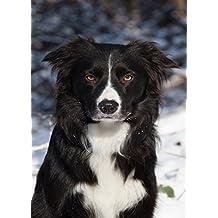 Soigner son chien: Santé, nourriture, vieillissement, vaccins (Les petits guides t. 1) (French Edition)