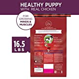 Purina ONE Natural Dry Puppy Food, SmartBlend
