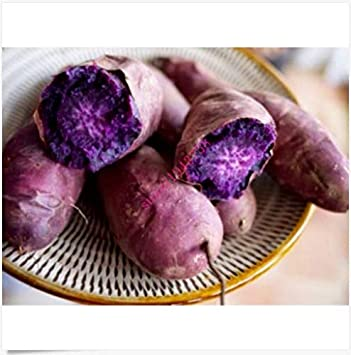Portal Cool 200Pcs Purple Sweet Potato Seeds Yam Seed Garden