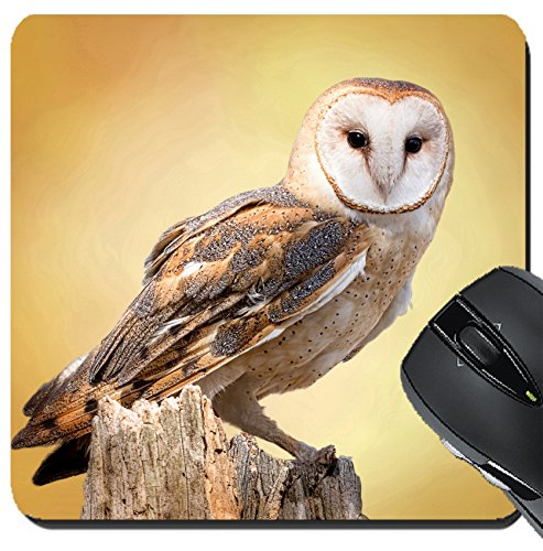 MSD Suqare Mousepad 8x8 Inch Mouse Pads/Mat design 27944160 A barn owl perched on a dead tree stump Barn Owls are silent predators of the night world Lanky with a whi