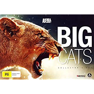 Big Cats Collector's Set DVD